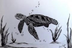 tortuga-tinta-china