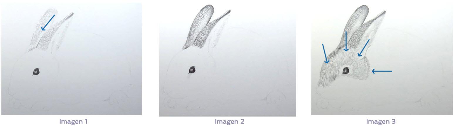 Cmo dibujar pelo de animal  ArteconAles