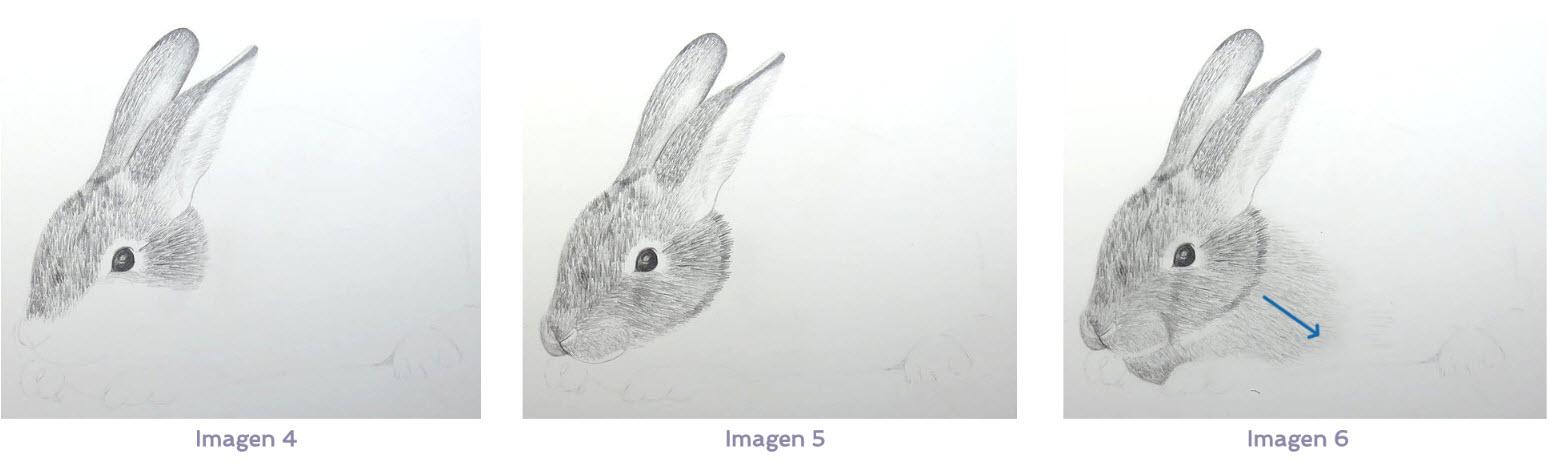 Cómo Dibujar Pelo De Animal Arteconales